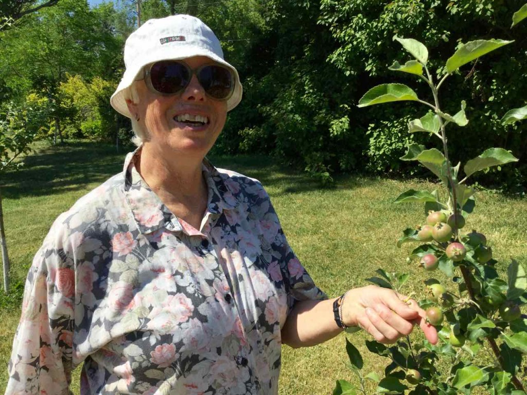 Marilyn prepares to thin the fruit on this young Asian pear tree and to apply Orchard Sox