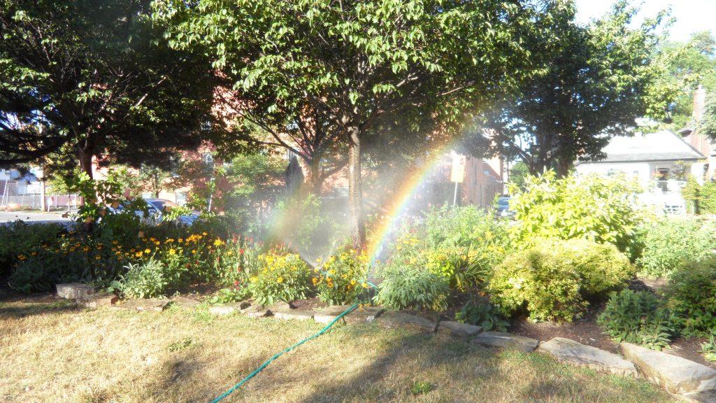 Cliff's sprinkler in pollinator garden creating a rainbow.